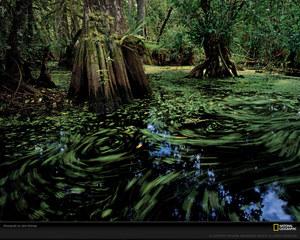 big-cypress-reservation-florida-xl.jpeg