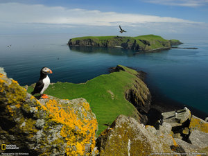 puffin-shiant-islands--w.jpeg